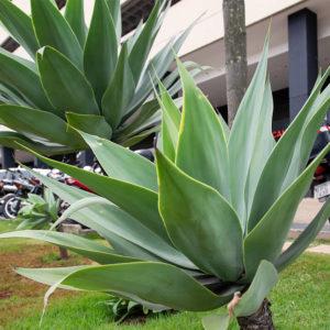 condominio-icon-vila-da-serra-20
